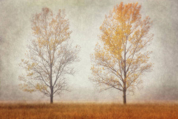 Photograph - Misty Duo by Leda Robertson