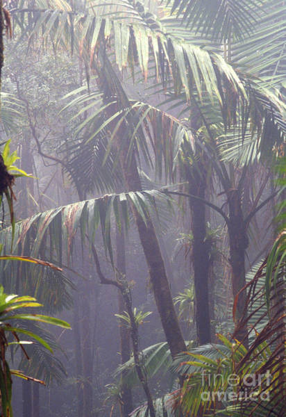 Photograph - Misty El Yunque Rainforest by Thomas R Fletcher