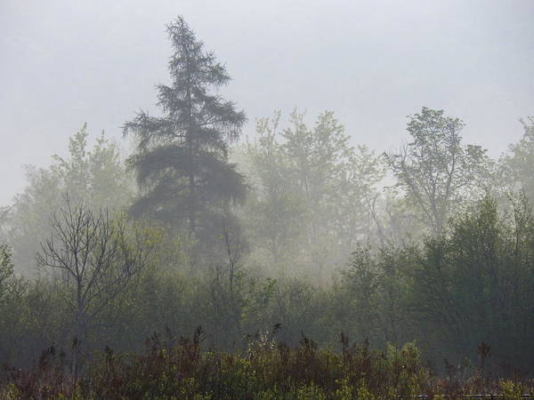 Photograph - Misty Fae Forest by Wild Thing