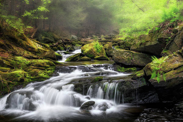 Photograph - Misty Forest by Bill Wakeley