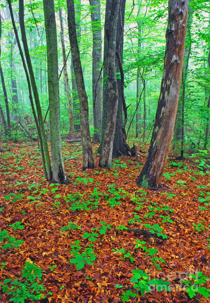 Wall Art - Photograph - Misty Forest by Thomas R Fletcher