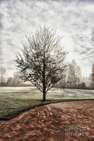Photograph - Misty, Frosty Morning Sun by Lois Bryan
