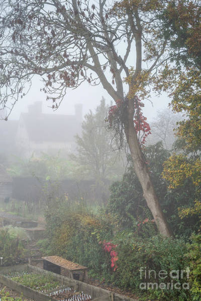 Photograph -  Misty Garden, Great Dixter 2 by Perry Rodriguez