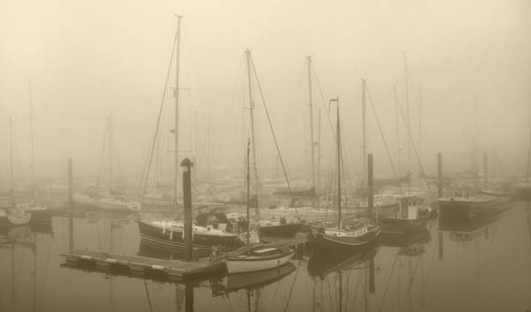 Wall Art - Photograph - Misty Harbour by Terence Davis