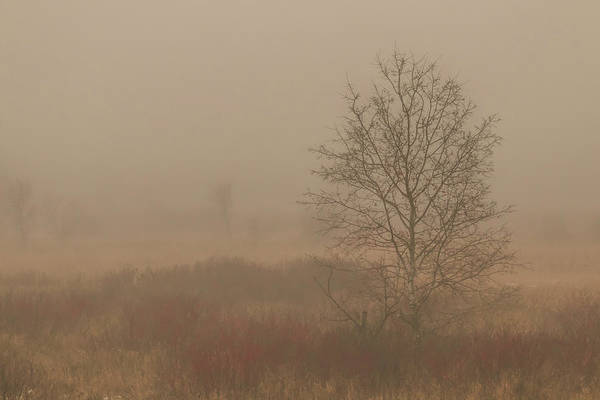 Photograph - Misty Late Fall Landscape by Patti Deters