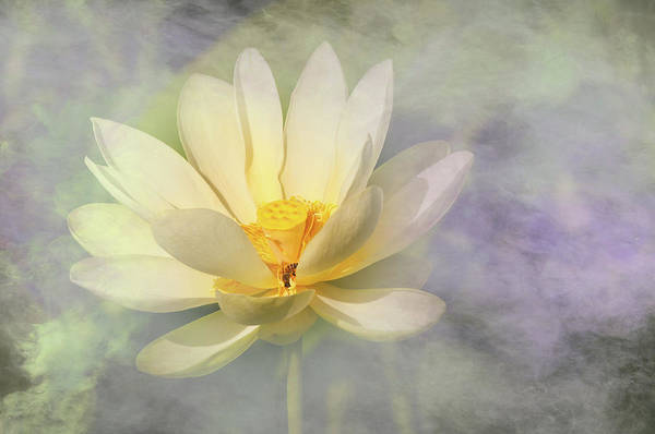 Wall Art - Photograph - Misty Lotus by Carolyn Dalessandro