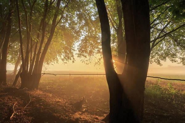 Photograph - Misty Meadow Sunrise by Kyle Lee