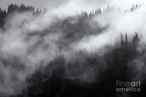 Wall Art - Photograph - Misty by Mike Dawson