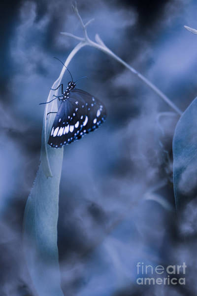 Butterfly Bush Wall Art - Photograph - Misty Moonlight Butterfly In Blue Twilight Forest by Jorgo Photography - Wall Art Gallery
