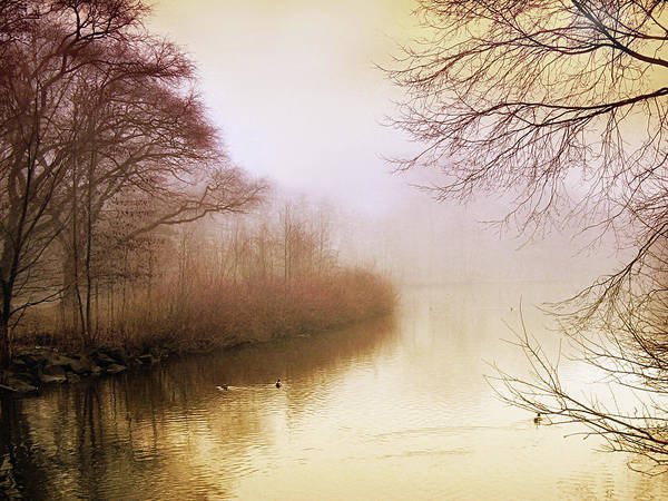 Photograph - Misty Morn by Jessica Jenney