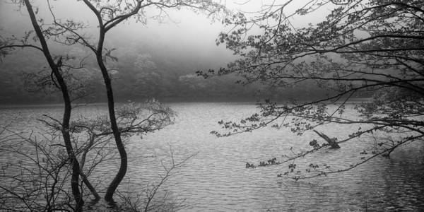 Photograph - Misty Morning by Brad Brizek