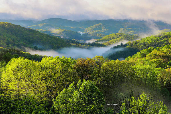 Photograph - Misty Morning by Dale R Carlson