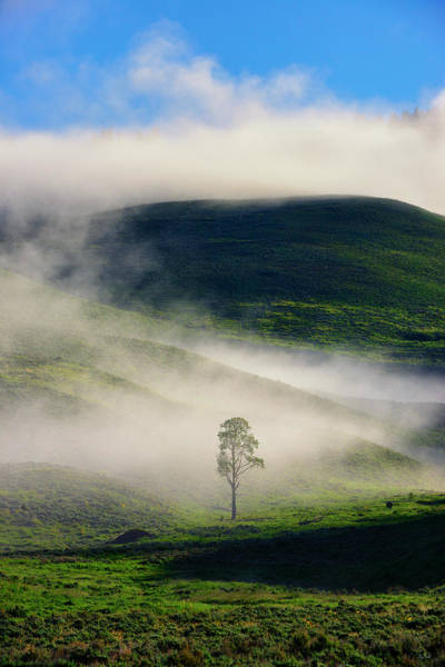 Photograph - Misty Morning by Greg Norrell
