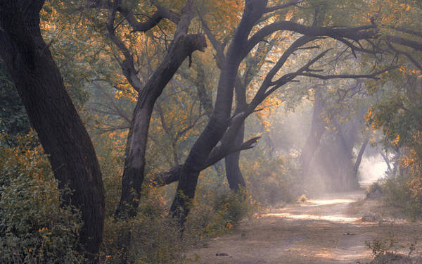 Photograph - Misty Morning, Bharatpur, 2005 by Hitendra SINKAR