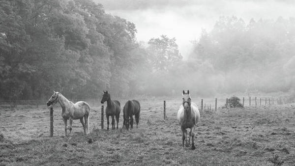 Photograph - Misty Morning Horses by Frank Morales Jr