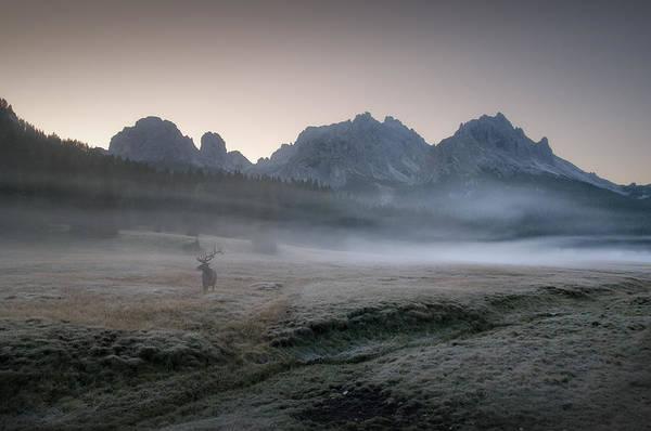 Law Enforcement Photograph - Misty Morning by Inigo Cia