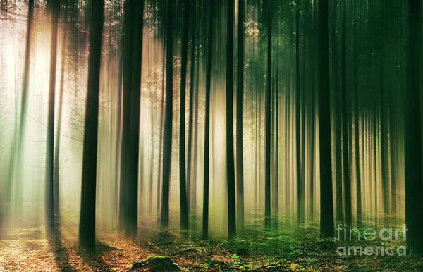 Photograph - Misty Morning Light by David Lichtneker