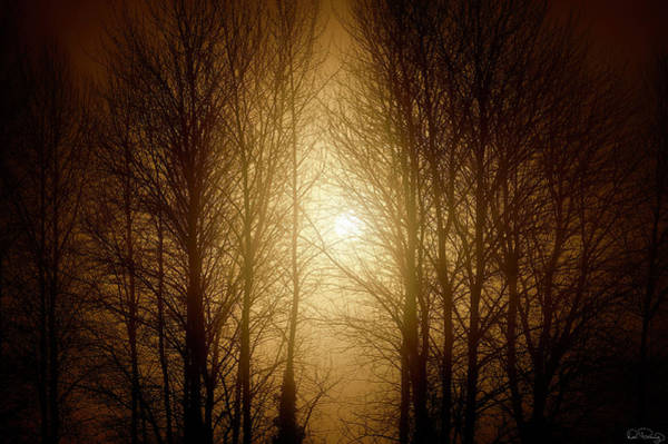 Photograph - Misty Morning Light  by Dee Browning