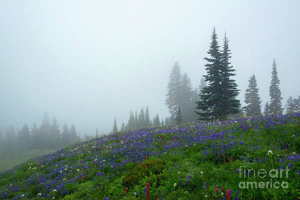 Wall Art - Photograph - Misty Morning Meadow by Mike Dawson