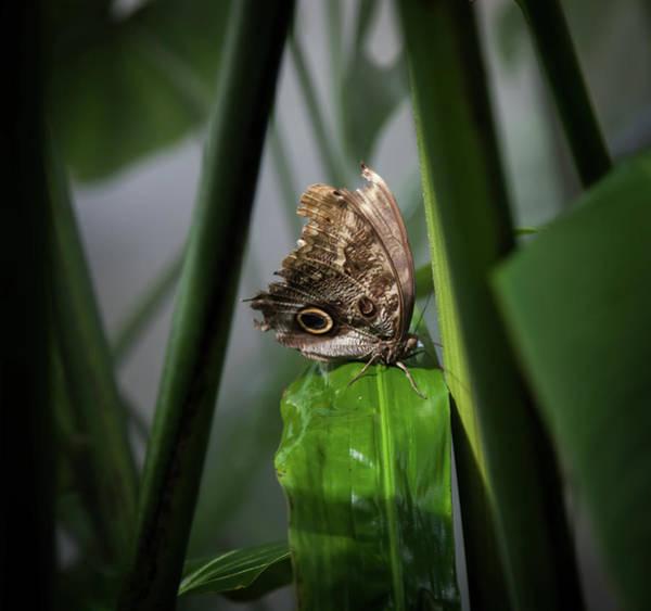 Wall Art - Photograph - Misty Morning Owl by Karen Wiles