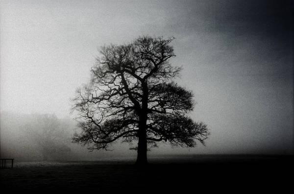 Moberly Photograph - Misty Oak. by Guy Moberly
