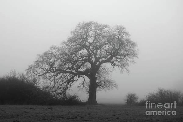 Photograph - Misty Oak Tree by Julia Gavin