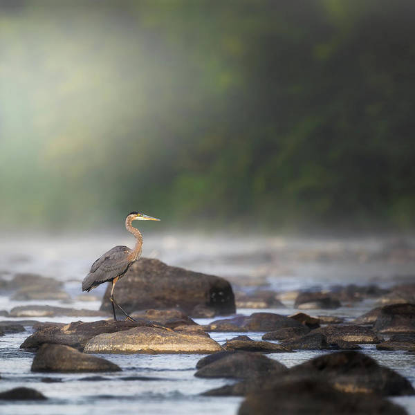 Photograph - Misty River Morning Square by Bill Wakeley