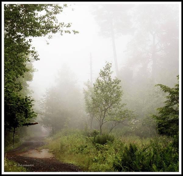 Misty Road At Forest Edge, Pocono Mountains, Pennsylvania Art Print