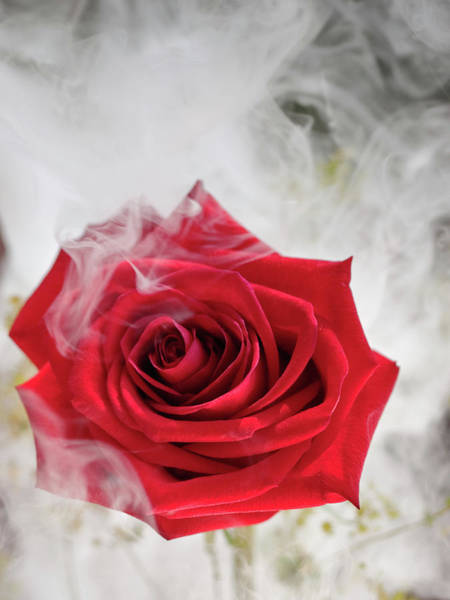 Photograph - Misty Rose by Jim DeLillo