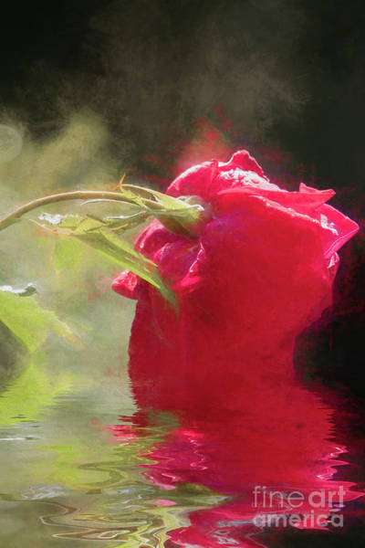 Photograph - Misty Rose Reflections by Elaine Teague