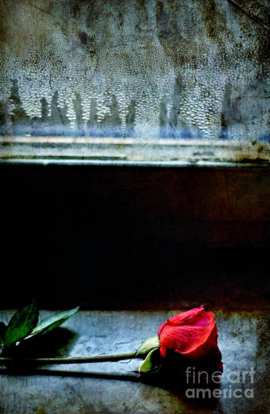 Photograph - Misty Rose by Silvia Ganora