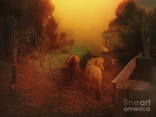 Misty Sundown Art Print