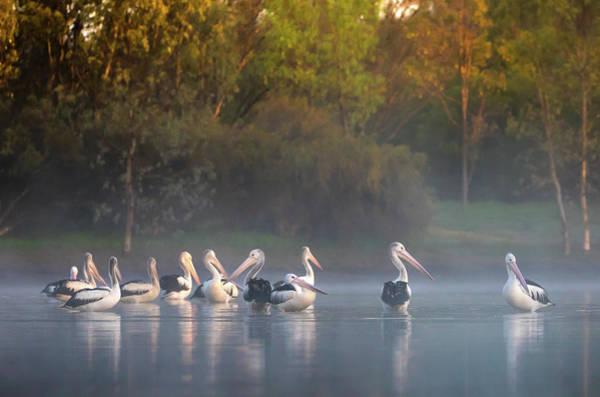Photograph - Misty Sunrise by Diana Andersen