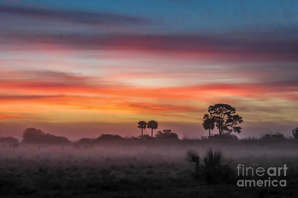 Silhoutte Photograph - Misty Sunrise by Liesl Walsh
