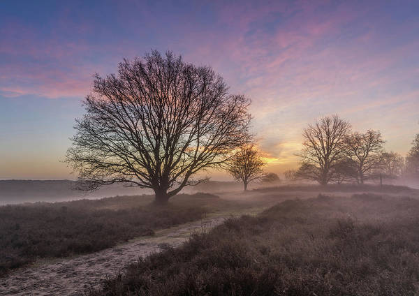 Photograph - Misty Sunrise by Mario Visser