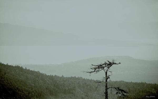 Photograph - Misty View by Roxy Hurtubise