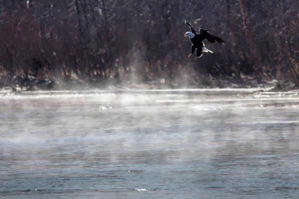 Photograph - Misty Water Eagle by Randy Scherkenbach