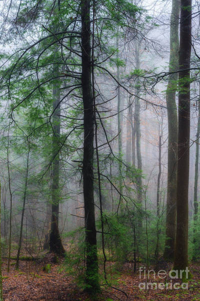 Photograph - Misty Winter Forest by Thomas R Fletcher