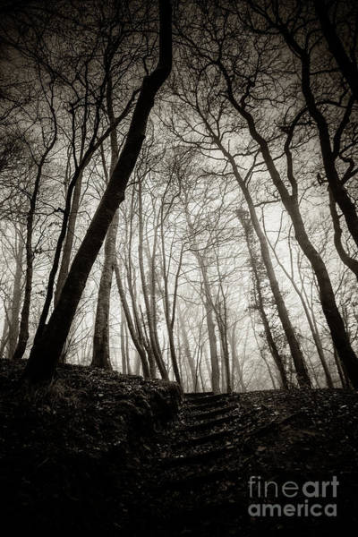 Photograph - Misty Winter Woodland 1 by Keith Morris