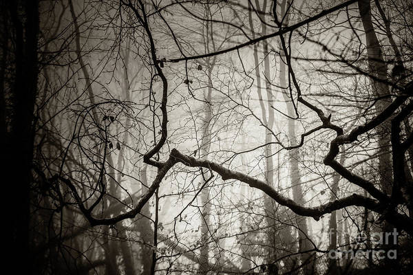 Photograph - Misty Winter Woodland 2 by Keith Morris