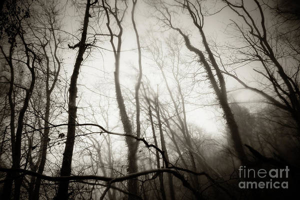 Photograph - Misty Winter Woodland 3 by Keith Morris