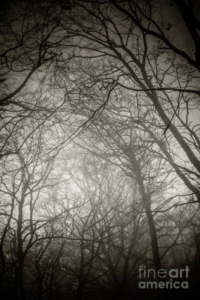 Photograph - Misty Winter Woodland 4 by Keith Morris