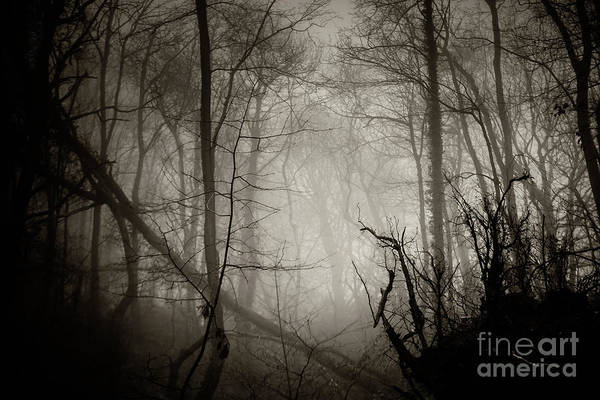 Photograph - Misty Winter Woodland 5 by Keith Morris