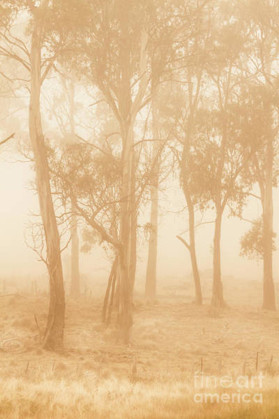 Gloomy Wall Art - Photograph - Misty Woods by Jorgo Photography - Wall Art Gallery