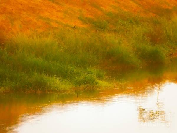 Misty Yellow Hue -lone Jacana Art Print
