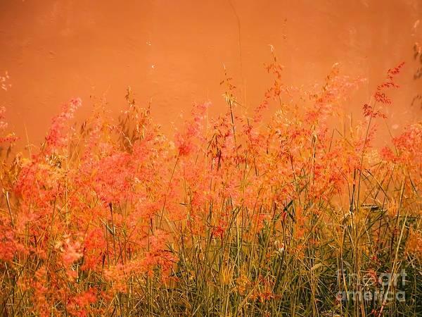 Misty Yellow Hue- Pink Blooms Art Print