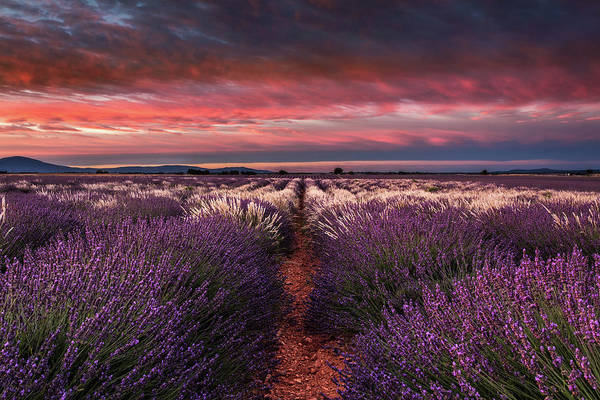 Photograph - Mixed Fields by Jorge Maia