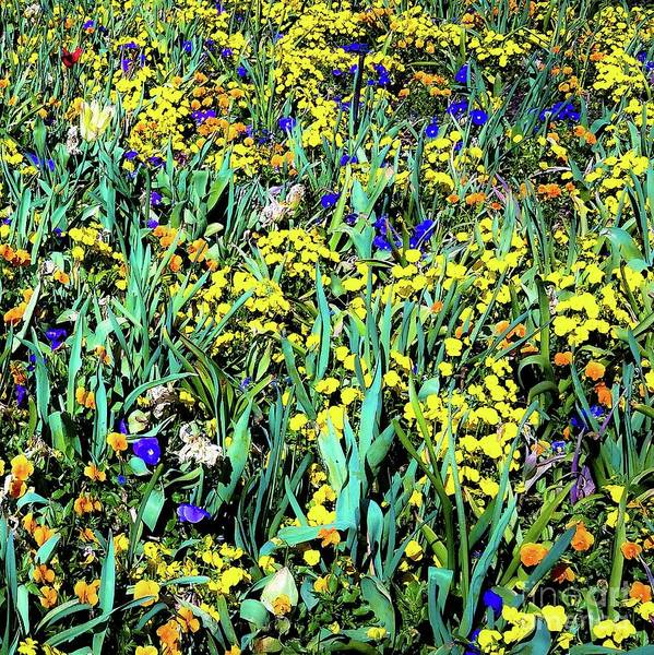 Mixed Flower Garden 515 Art Print