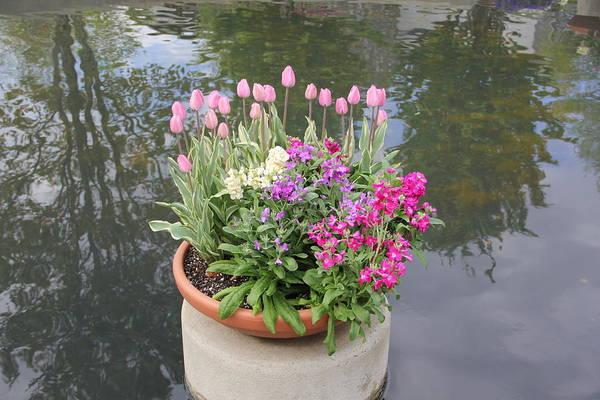 Mixed Flower Planter Art Print
