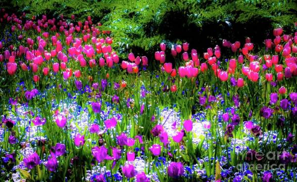 Photograph - Mixed Flowers With Tulips by D Davila